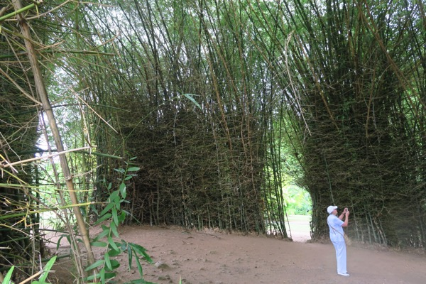BG Bamboo wall