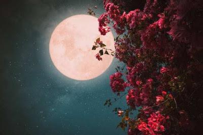 गुलाबी चंद्रमा 2021 | Pink Moon About In Hindi