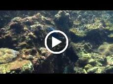 Diving in Hin Daeng, Ko Lanta