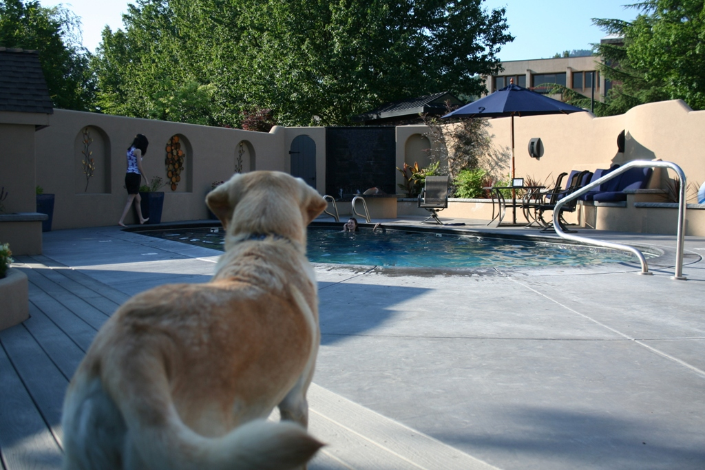 cabana from the back in the foreground, as she stands alert watching her family members in and around the swimming pool