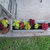 Gardening 2010, Part Three - 101_4906.JPG