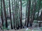Tan Bark Trail