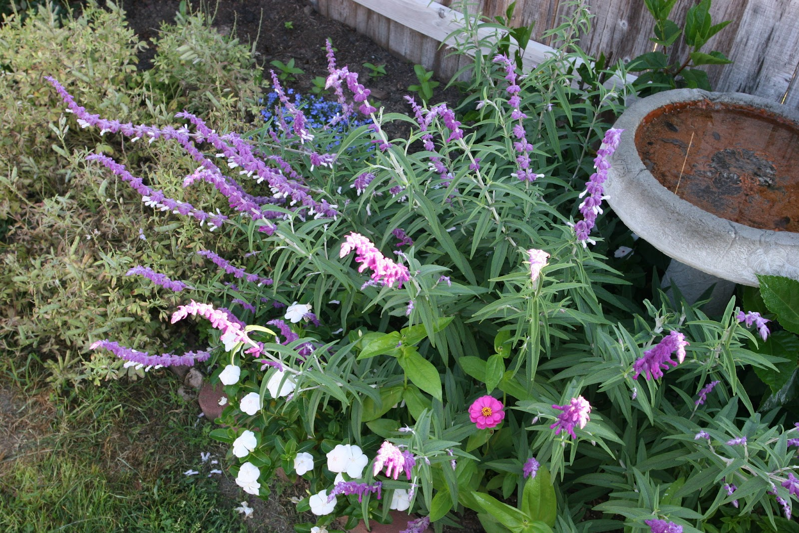 Gardening 2012 - IMG_3119.JPG