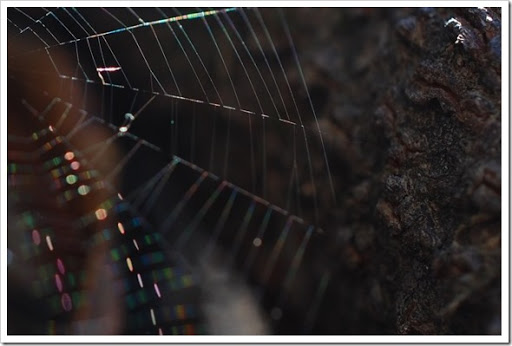 spiderwb copy