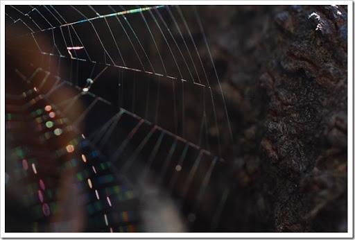 spiderwb copy