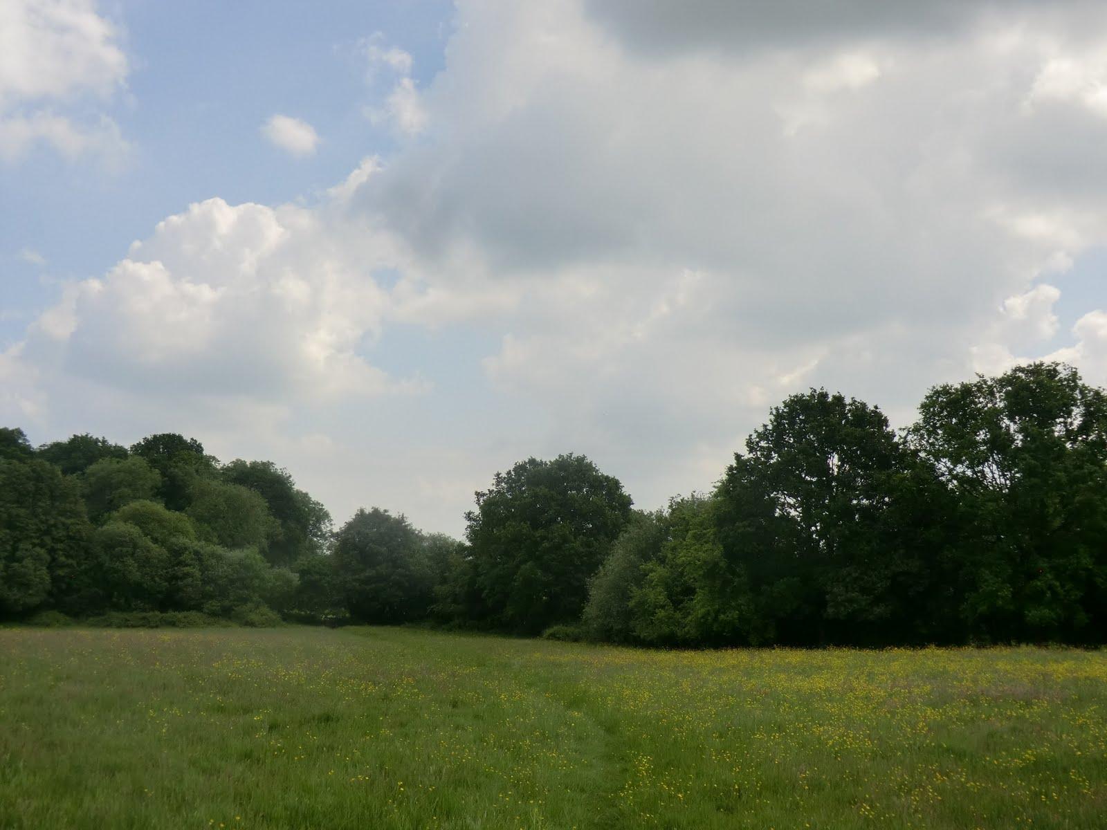 CIMG1746 Wildflower meadow at Watt's Cross