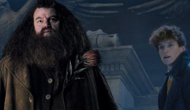 Teoria de como Hagrid e outros personagens de Harry Potter podem aparecer nos próximos filmes de Animais Fantásticos