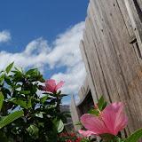 Gardening 2013 - 115_5707.JPG