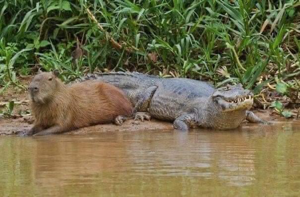 ¿Sabías que existe un animal que se hace amigo de cualquiera que se encuentre en su camino?