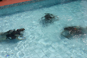 Practicing for scuba diving in a pool in Saint Kitts