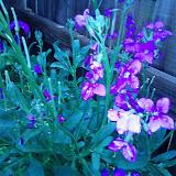 Gardening 2013 - IMG_20130316_102858.jpg