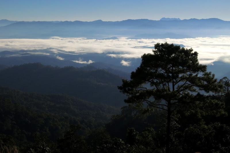 tree - looking east