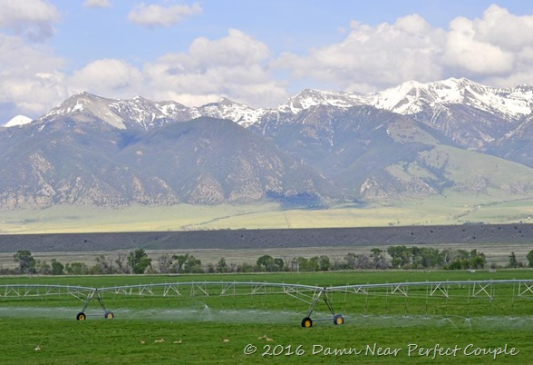 Pronghorn and the Mountains