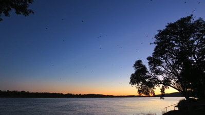 Sunset and Bats Pat 001