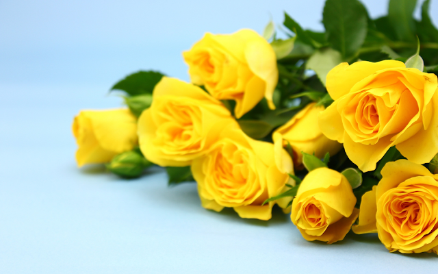 Fresh Flowers - Yellow Roses - Withlovenregards