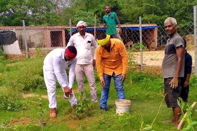 पर्यावरण को स्वच्छ रखने के लिये ग्राम प्रधान ने लगाये 500 पौधे