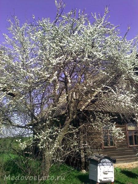 Весна на пасеке