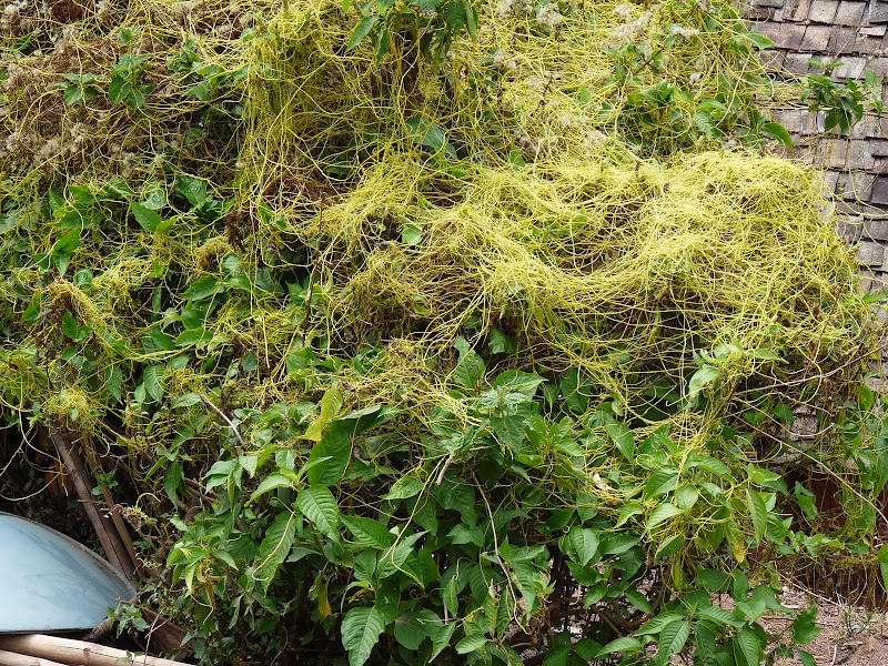 curieuse plante
