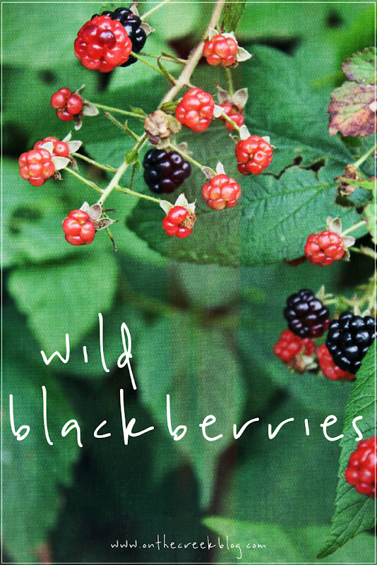 Wild Blackberries | On The Creek Blog