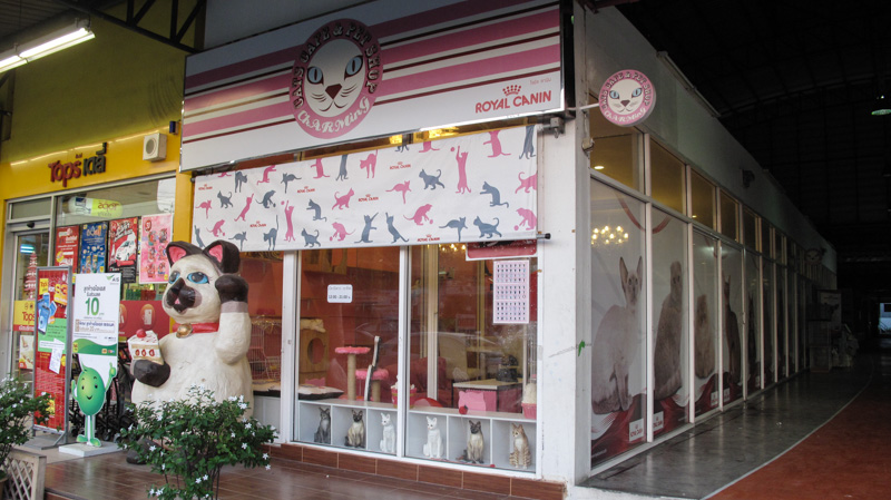 Charming Cat Cafe Dallas Tx
