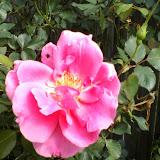 Gardening 2014 - 0405102748.jpg
