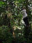 An der Liana in den Urwald schwingen