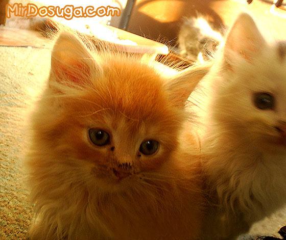 прикольные фото котят фото 3