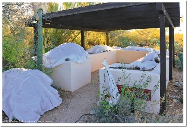 151230_Tucson_Tohono-Chul-Park_0022