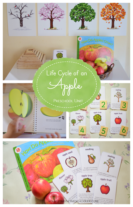 LifeCycleApple