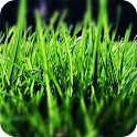 Grass Wallpapers icon