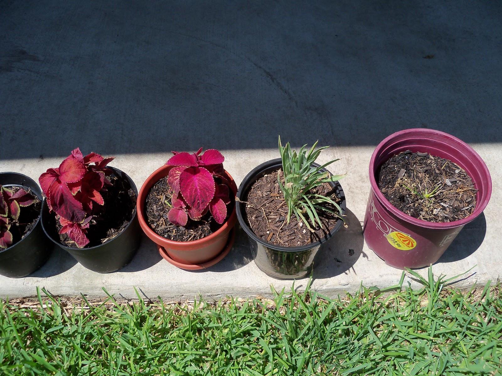 Gardening 2010, Part Three - 101_4484.JPG