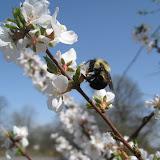 Bumble Bee (Margot Hughes)