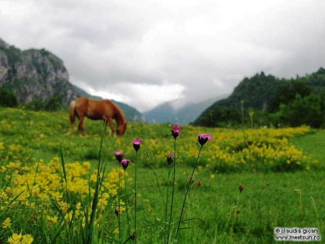 garofite si cai