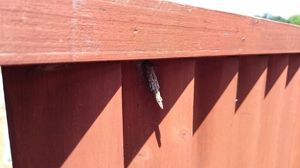 蓑虫(みのむし)の写真