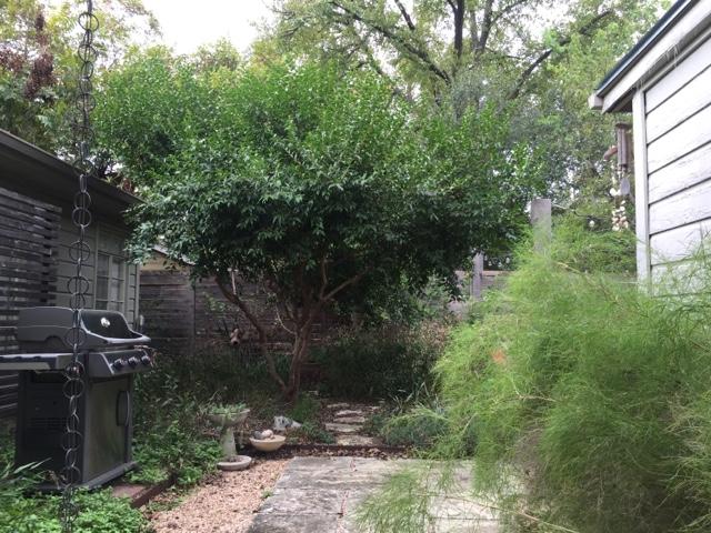 Cómo mantener Javelina lejos de su patio | Arizona Curiosidades