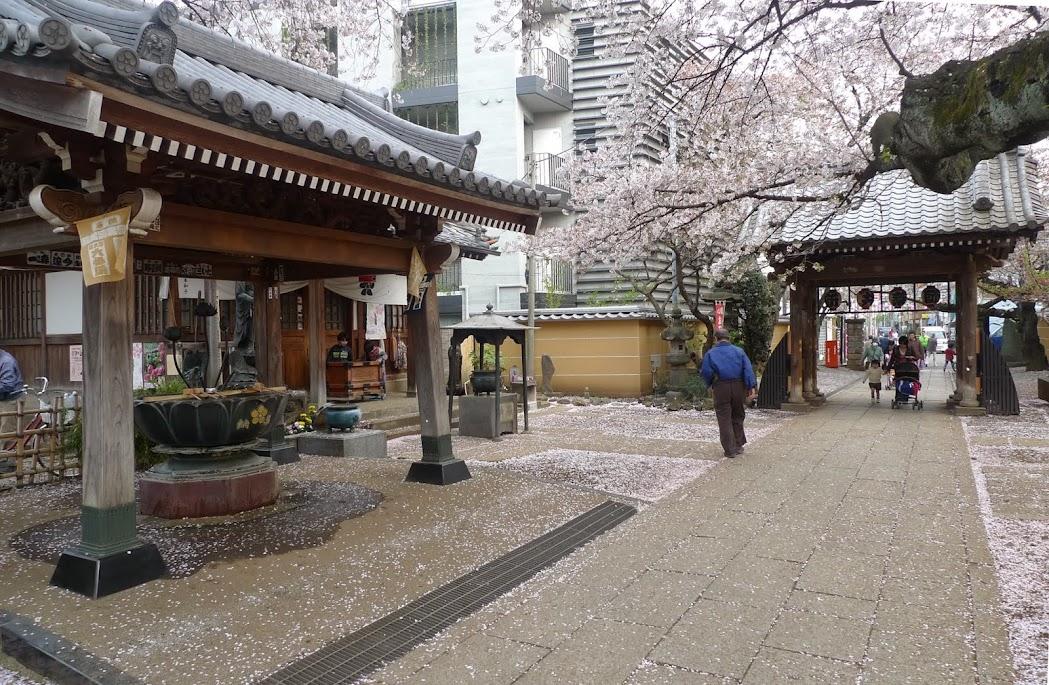 sakura nakano araiyakushi