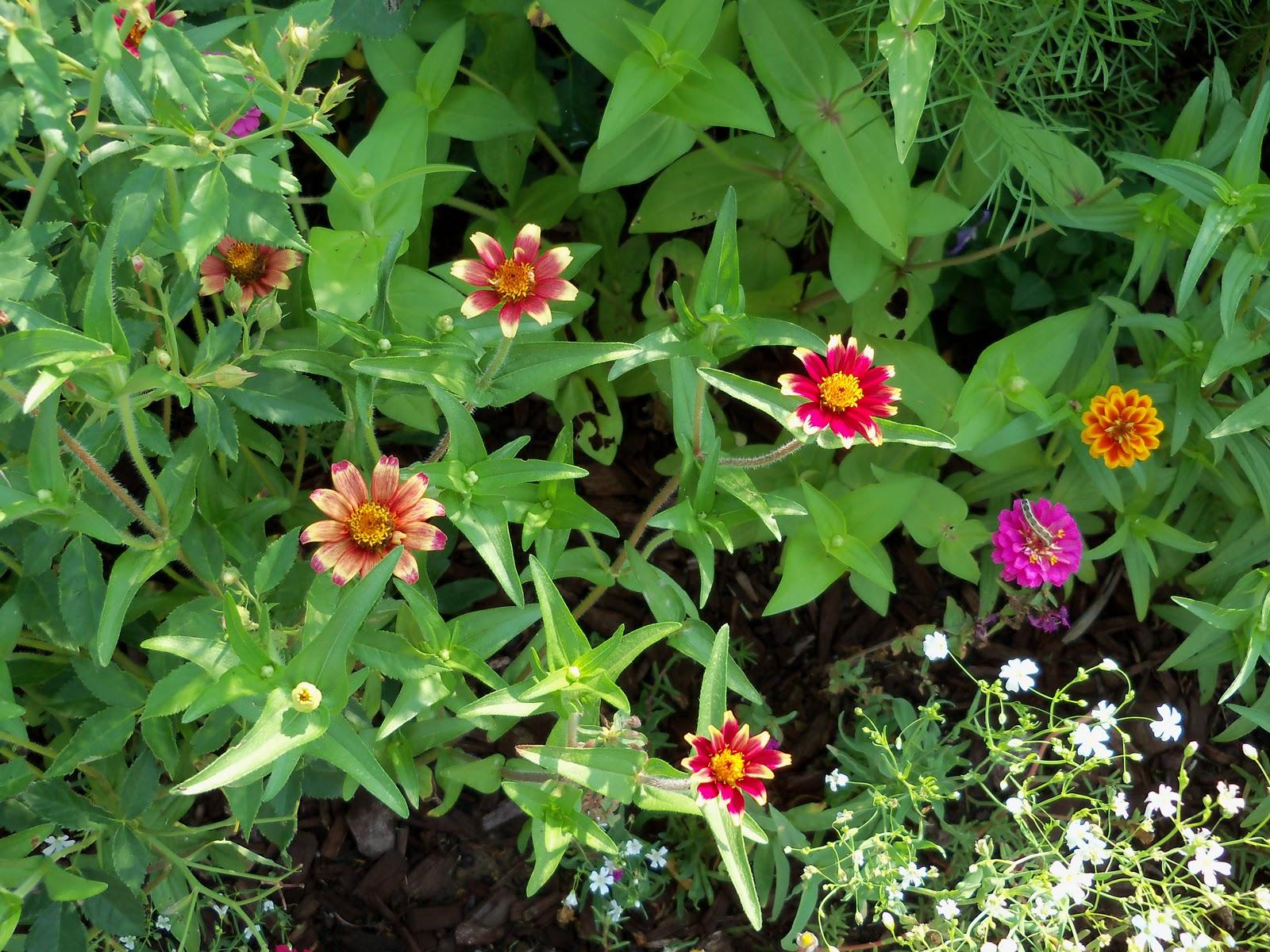 Gardening 2010, Part Two - 101_3294.JPG