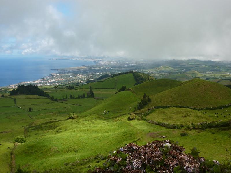 Açores- Natureza viva P1000625