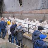 Bevers en Welpen- Lammetjes kijken - IMG_7670.JPG