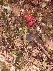 Corpo de homem em estado de decomposição é encontrado em Esperantinópolis