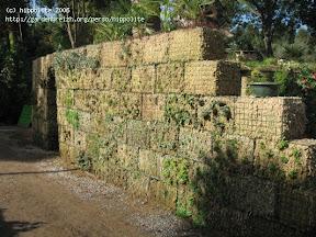 mur végétal à la pépinière grangier monté en quelques heures un jeu d'enfant