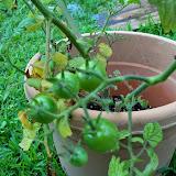 Gardening 2014 - 116_2603.JPG