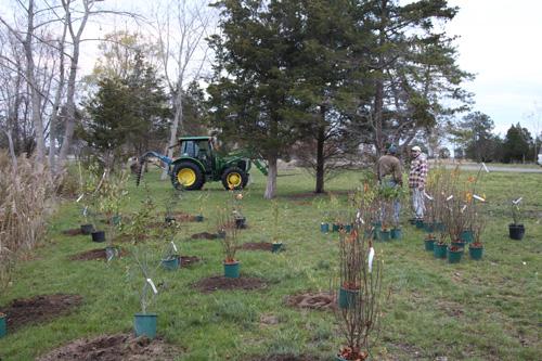 Hammo Fall Planting - Jim Murtagh - BC3G2513.jpg