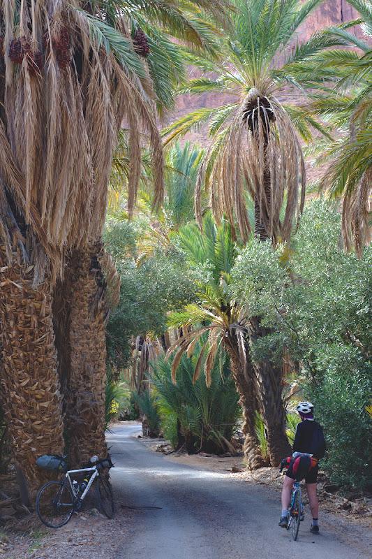 Ai zice ca pedalezi printr-o gradina botanica, si nu poti sa nu te intrebi cat de batrani sunt unii dintre palmierii prin care pedalezi.