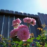 Gardening 2010, Part Two - 101_2605.JPG