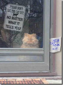dont let the cat out 2