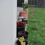 Gardening 2010, Part Two - 101_2768.JPG