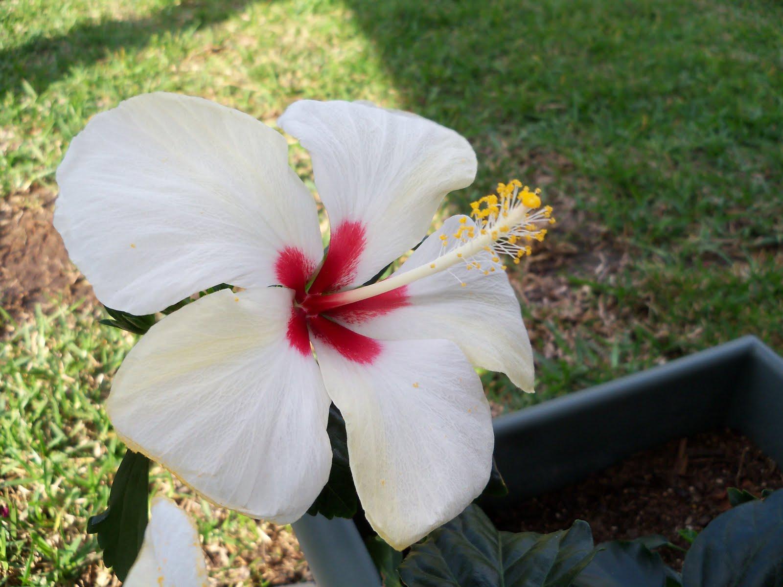 Gardening 2010 - 101_0978.JPG
