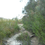 Fredericks Track coming to management Trail (305652)