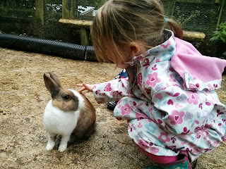 Stroking a rabbit
